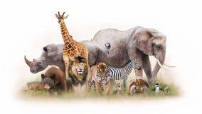 小组一起被隔绝的动物园动物 图库摄影