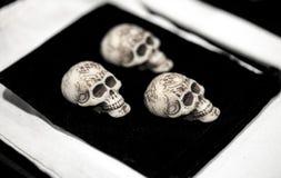 小组三块象牙头骨 免版税库存图片