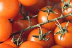 小组与浅DOF的新鲜的成熟西红柿选择聚焦宏观射击 免版税图库摄影