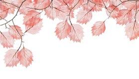 小组与红色叶子的被隔绝的树枝 免版税库存照片