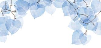 小组与蓝色叶子的被隔绝的树枝 免版税库存照片