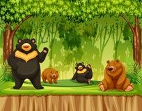 小组北美灰熊在密林 皇族释放例证