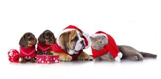 小组圣诞节小狗在白色背景 库存图片