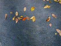 小组在柏油路的干燥叶子 免版税库存照片