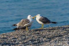 小组在海滩的海鸥 免版税图库摄影