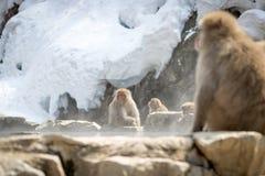 小组在温泉的猴子 免版税图库摄影