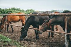 小组在牧场地的美丽的幼小马在动物农场中或大农场、农村家畜或者农田 免版税库存照片
