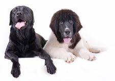 小组在白色背景前面的另外品种狗 图库摄影