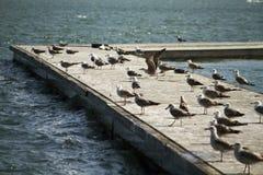 小组在码头的海鸥 库存图片