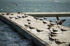 小组在码头的海鸥 免版税库存照片