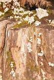 小组在老树桩的毒蘑菇 库存照片