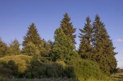 小组在草地的树 库存图片