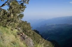 小组在Simien山的Gelada猴子,埃塞俄比亚 库存照片