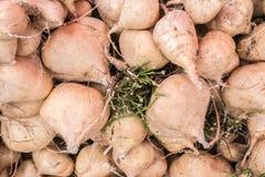 小组墨西哥薯类或Jicama 库存照片