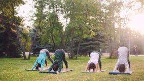 小组小姐在公园在席子实践瑜伽户外在秋天天,灵活的女孩行使 人们 影视素材