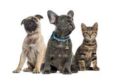 小组小狗和猫开会,被隔绝 库存照片