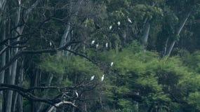小组开放比尔鹳在密集的森林里 免版税库存图片
