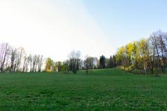 小组杉树在秋天森林和蓝天背景的一块森林沼地与云彩 免版税库存图片