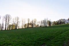 小组杉树在秋天森林和蓝天背景的一块森林沼地与云彩 库存照片