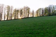 小组杉树在秋天森林和蓝天背景的一块森林沼地与云彩 免版税库存照片