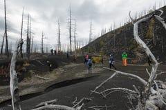 小组游人和旅客在死的木死的森林里走 图库摄影