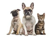 小组狗和猫开会,被隔绝 库存图片
