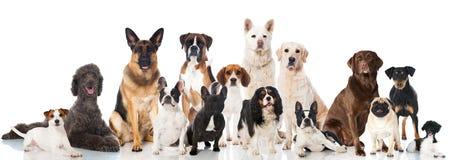 小组狗 库存照片