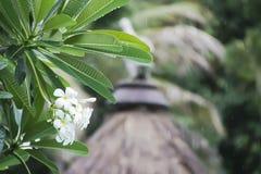 小组白色羽毛在雨中开花 免版税库存图片