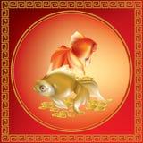 小组美丽的红色和金黄金鱼 库存照片
