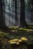 小组蘑菇生长 免版税库存照片