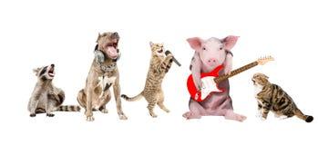 小组逗人喜爱的滑稽的动物音乐家 库存图片