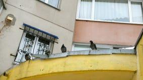 小组野生鸽子坐金属伸进屋顶 股票录像
