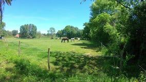 小组马在草甸 影视素材