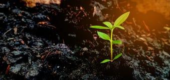 小绿色树土壤 免版税库存图片