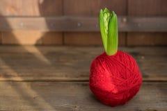 小绿色风信花在红色毛线球离开在老木背景 免版税库存图片
