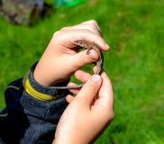 小绿蜥蜴在他的手上 库存照片
