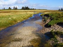 小美丽的小河在豪华的绿地 库存照片
