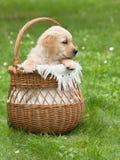 小美丽的小狗 库存照片