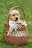 小美丽的小狗 免版税库存照片