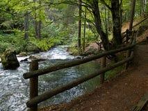 小美丽的溪小河瀑布在森林里 免版税库存图片