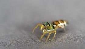 小美丽的蜘蛛 免版税库存图片