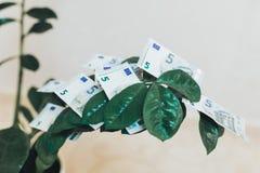 小美元树在站立在一个绝尘室的一个白色罐增长 金钱投资和收入成长的概念 嘲笑 图库摄影