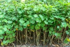 小自然植被照片  免版税库存图片