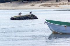 小船、海、海鸥和岩石 免版税库存照片
