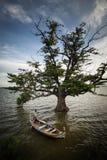 小船和树 免版税库存图片