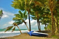 小船和棕榈树 库存照片