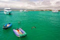 小船和鹈鹕在加拉帕戈斯 库存图片