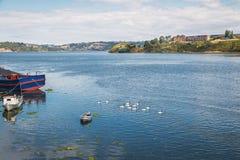 小船和黑收缩的天鹅在甘博亚河-卡斯特罗,奇洛埃岛海岛,智利 免版税库存图片