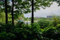 小船在多云夏天早晨城市临近嫩绿的湖边 免版税库存图片