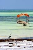 小船在桑给巴尔非洲海岸线的pirague鸟 免版税库存照片